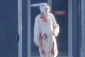 bunny dude